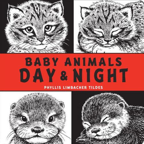 Baby Animals Day and Night