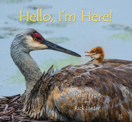 Hello, I'm Here!