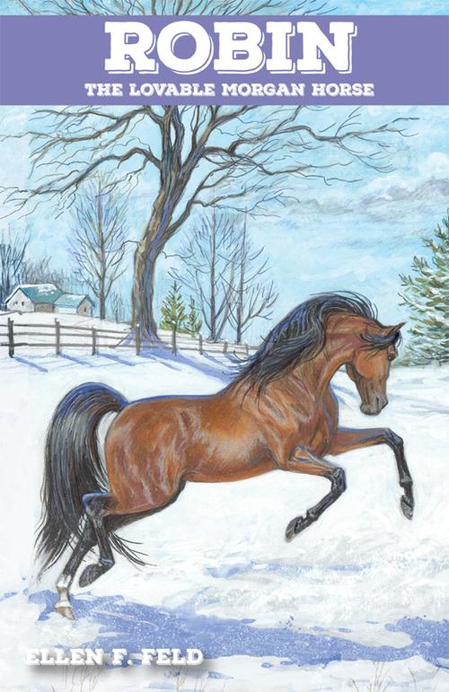 Robin, the Lovable Morgan Horse