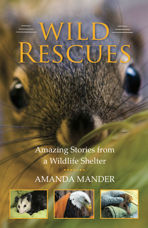 Wild Rescues: Amazing Stories from a Wildlife Shelter
