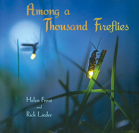 Among a Thousand Fireflies book