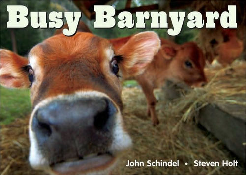 Busy Barnyard book