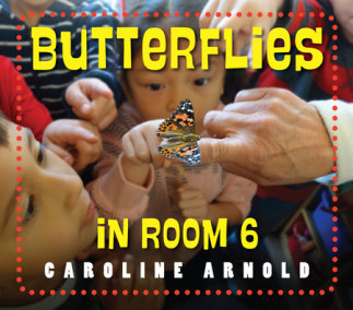 Butterflies in Room 6 book