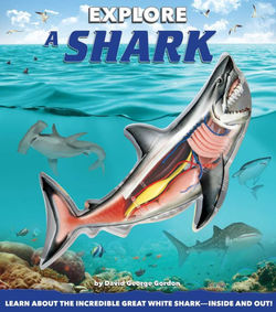Explore a Shark book