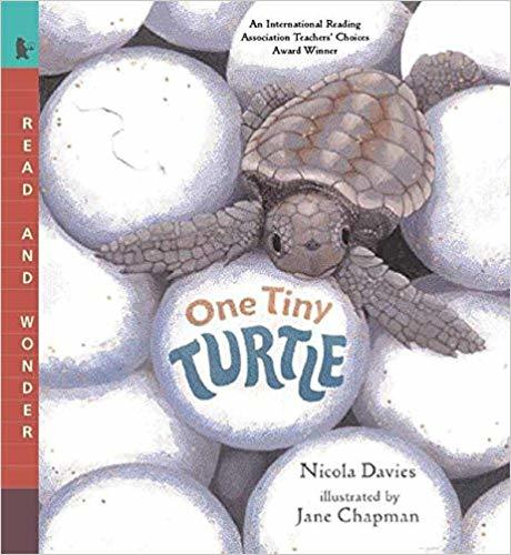 One Tiny Turtle: Read and Wonder book