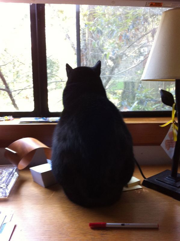 MITZIE, my Mews and Inspiration for ZOOK. She prefers to remain in-cat-nito, because of her celebrity.